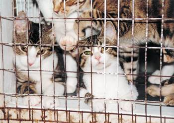 This could be anyone of your lost pets destined for cruel painful surgical experiments. Compassion is the fashion, STOP POUND SEIZURE NOW!!